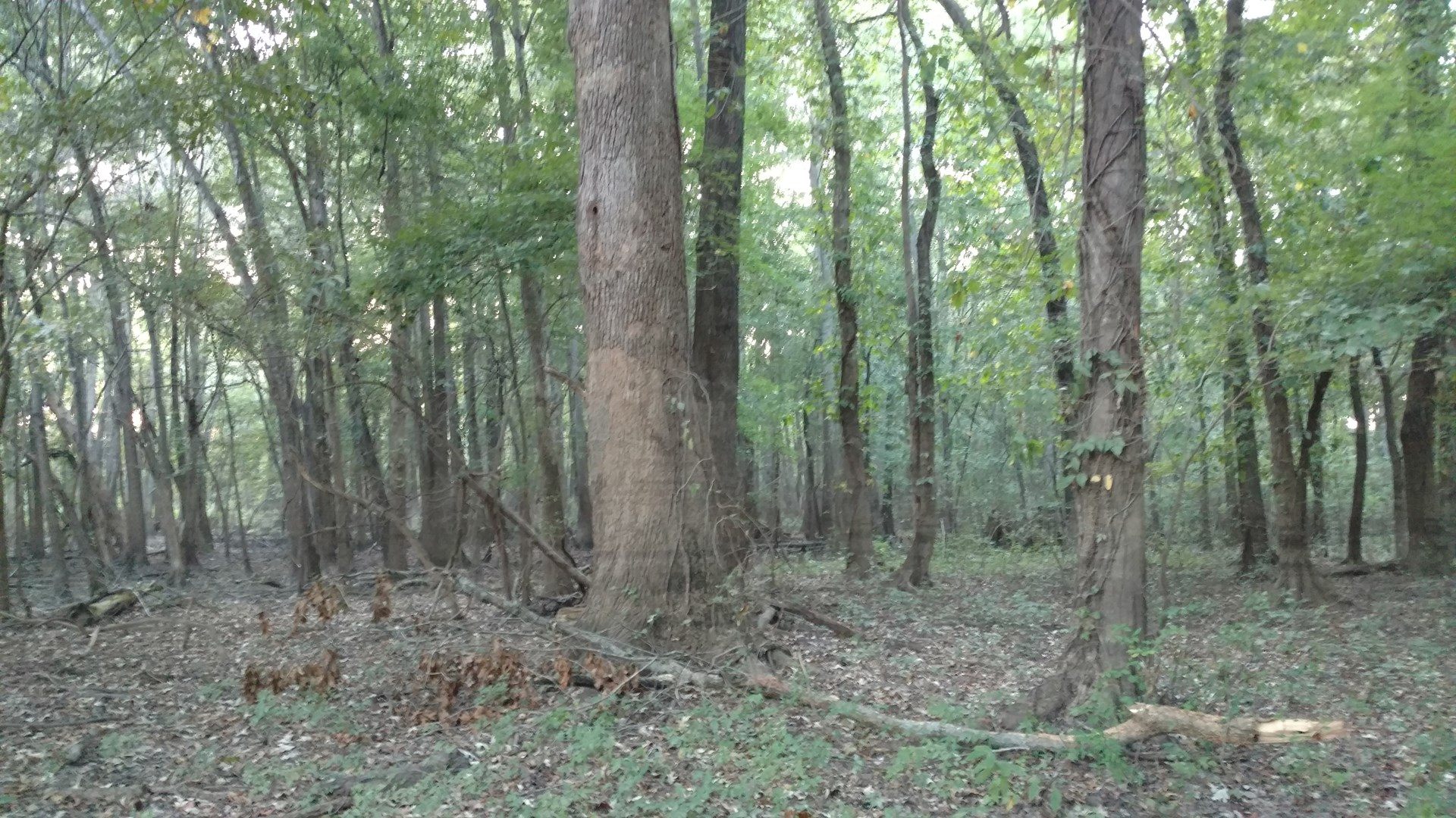 Hunting Property or Timber Property For Sale