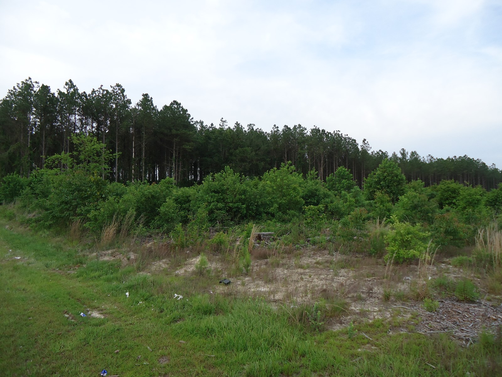 FOR SALE 2 WOODED ACRES IN LUGOFF, SC
