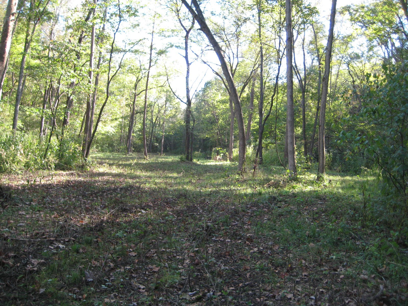 Missouri Hunting Land 15+/- Acres!  Joins Conservation Area!
