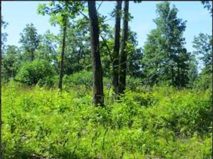 Land for Sale in Fulton County