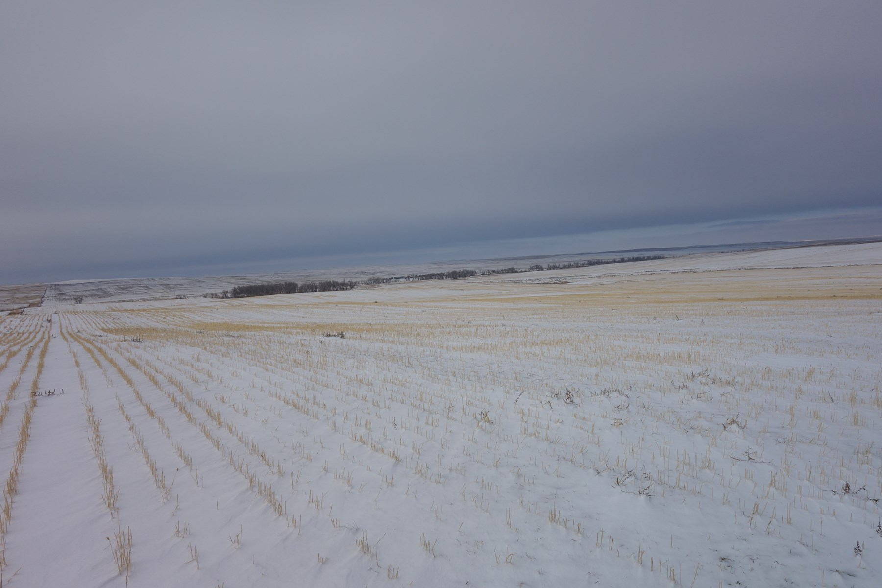Eastern Montana Mccone County Dryland Farmland For Sale