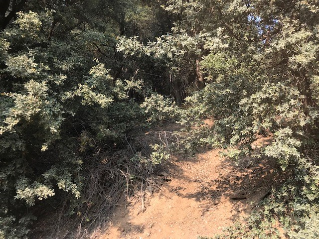 Land for Sale in Siskiyou County