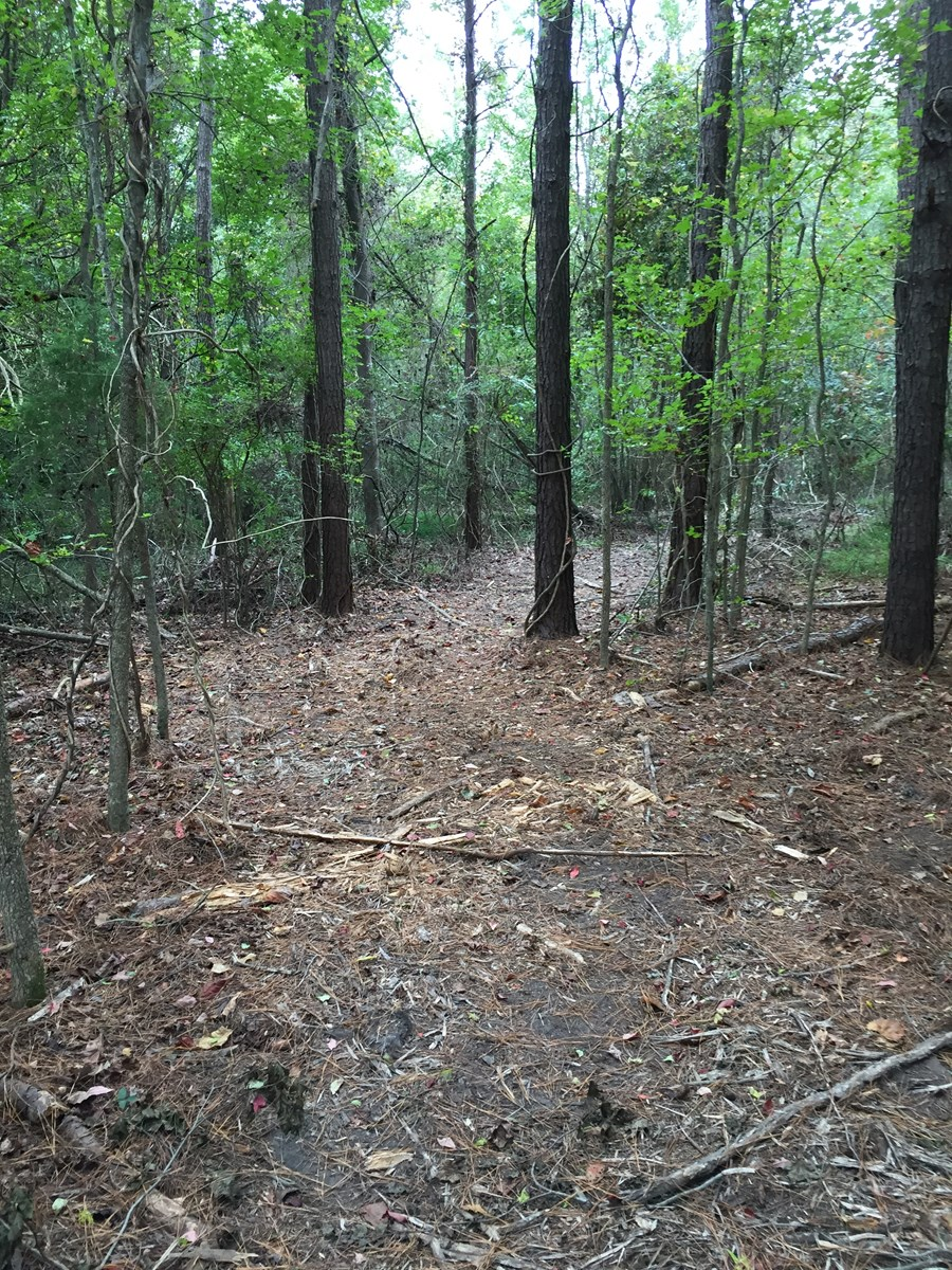Timber/Recreational Hunting Tract Beaufort County
