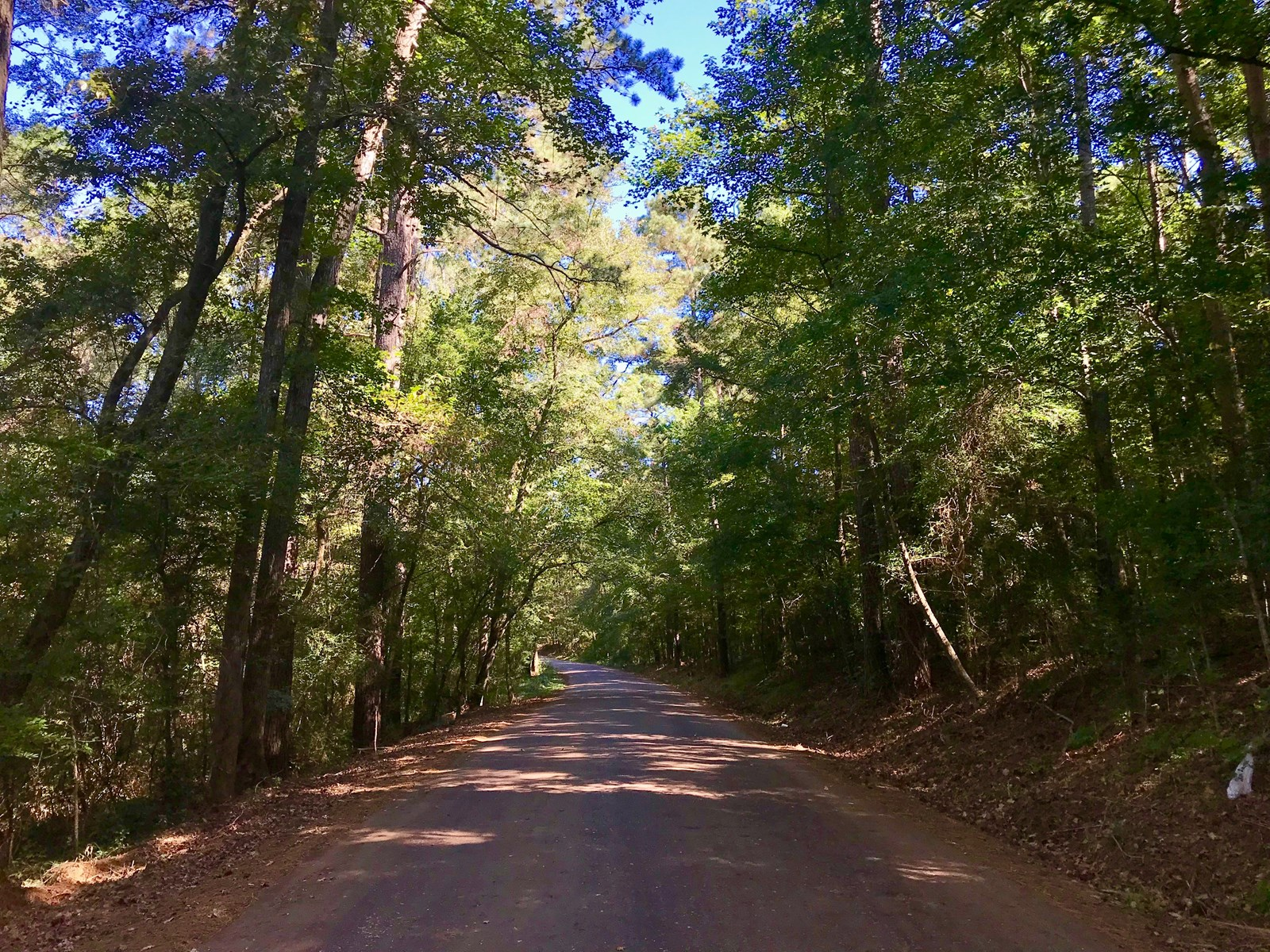 64 ACRES IN NACOGDOCHES CO, PERFECT HUNTING & PASTURE LAND