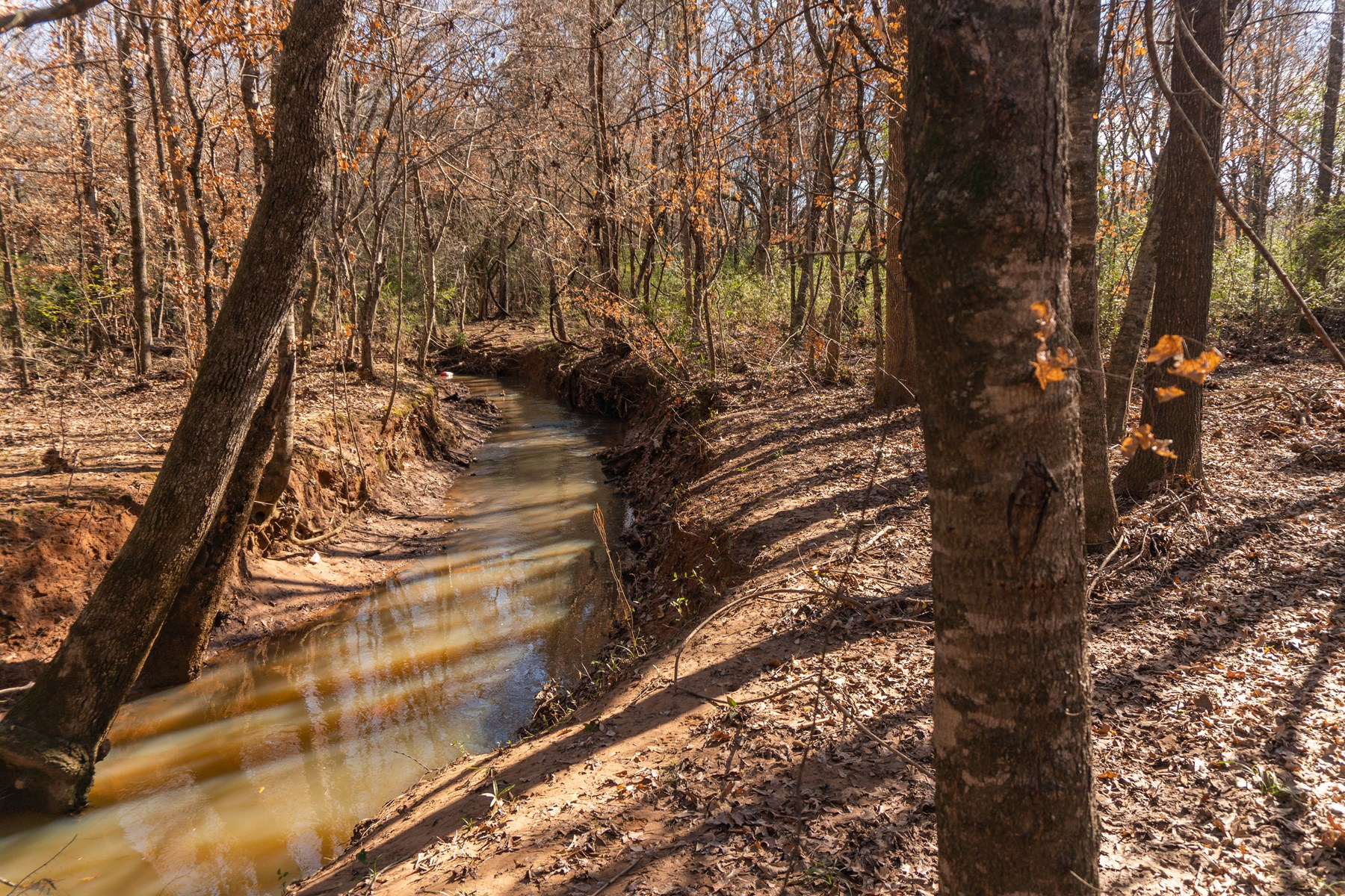 56 ACRES IN RUSK CO | CR FRONTAGE, NICE HILL, THICK FOREST