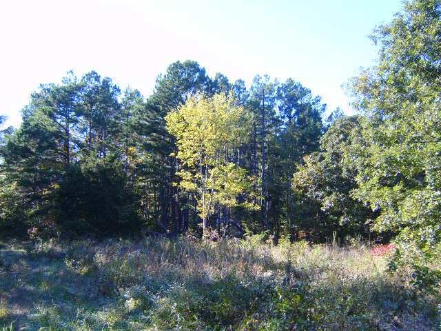 Land for Sale - 80 Acres - Hunting - Building Sites