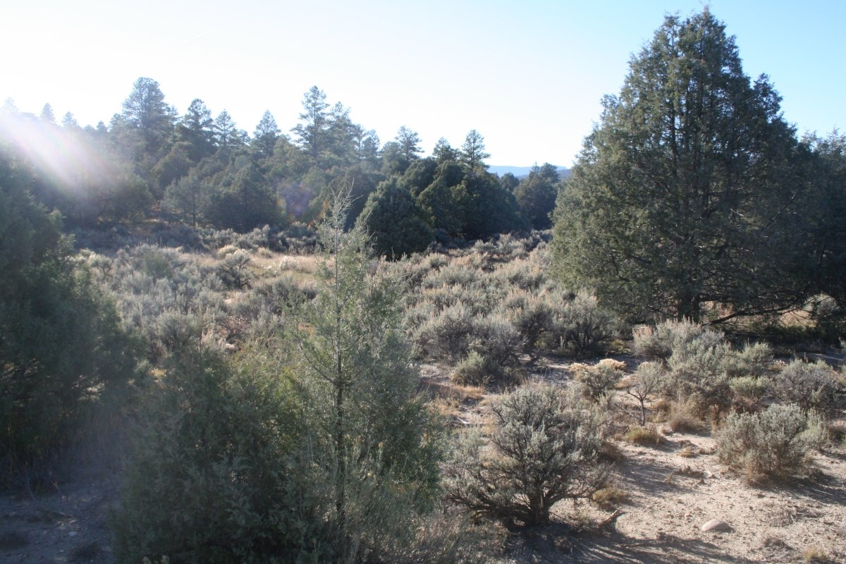 Land for Sale on Hwy 95 for Commercial or residential Use