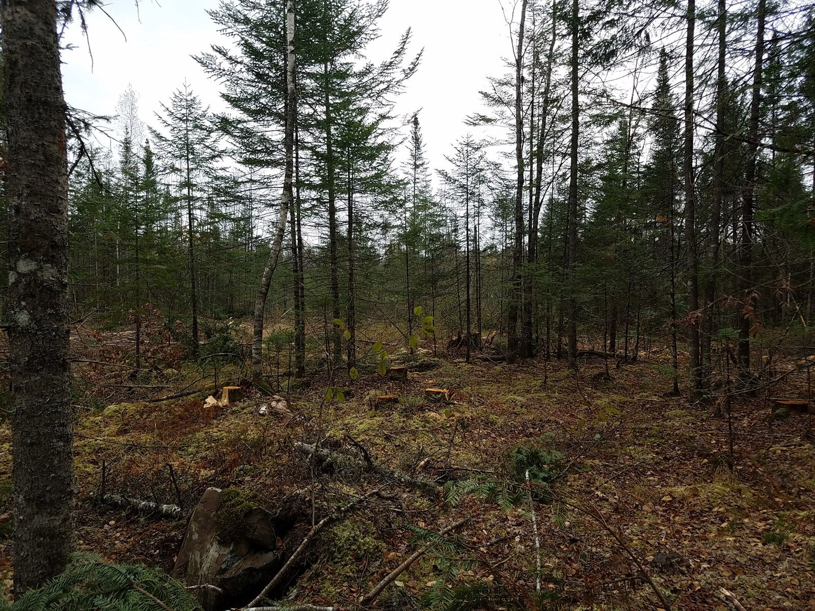 Maine Land for Sale in Enfield
