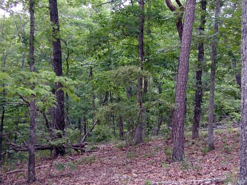 Missouri Ozarks hunting, residential, equine land for sale