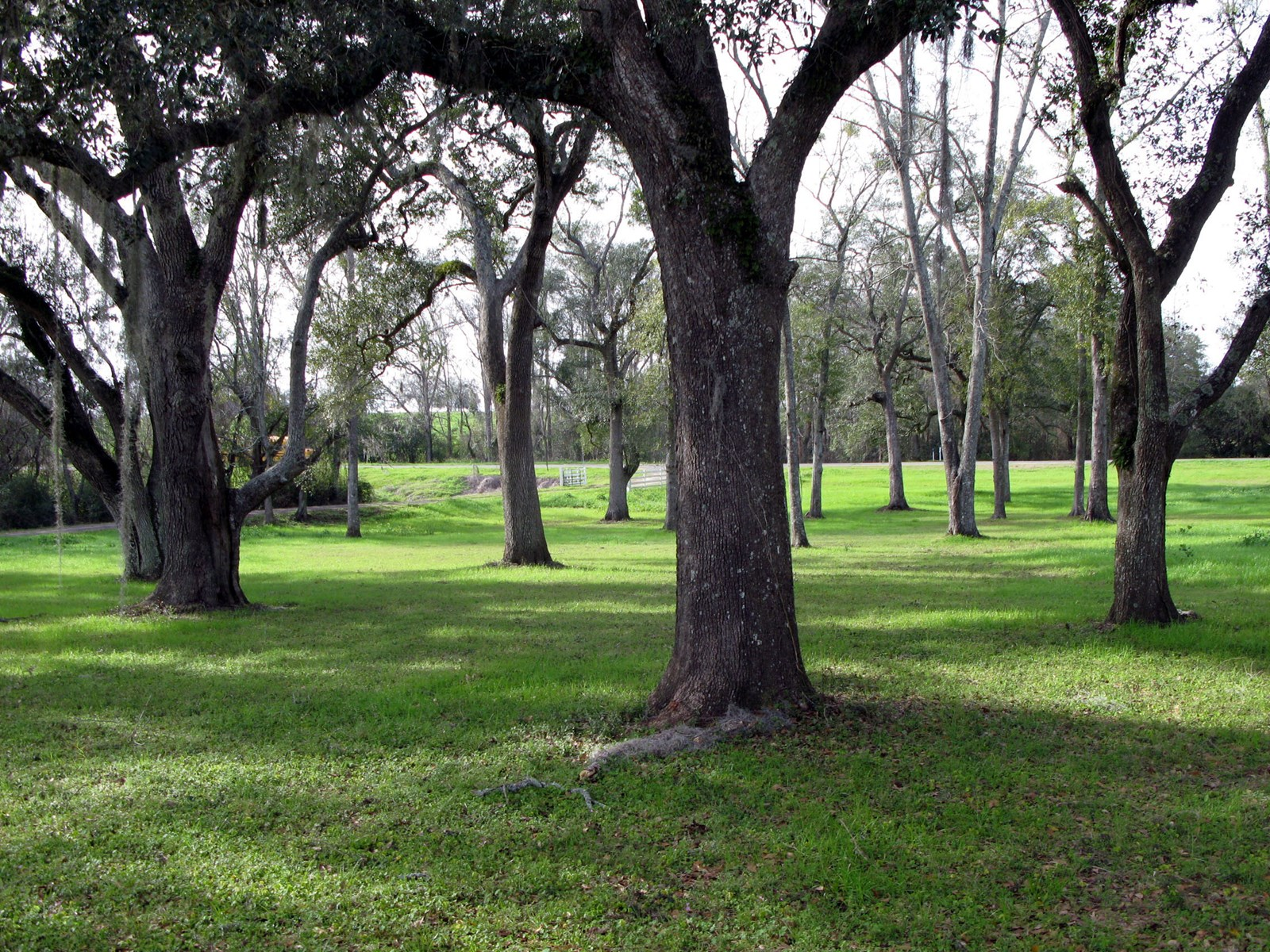 NORTH FLORIDA LAND WITH OAKS, WATER/STREAM, PASTURE
