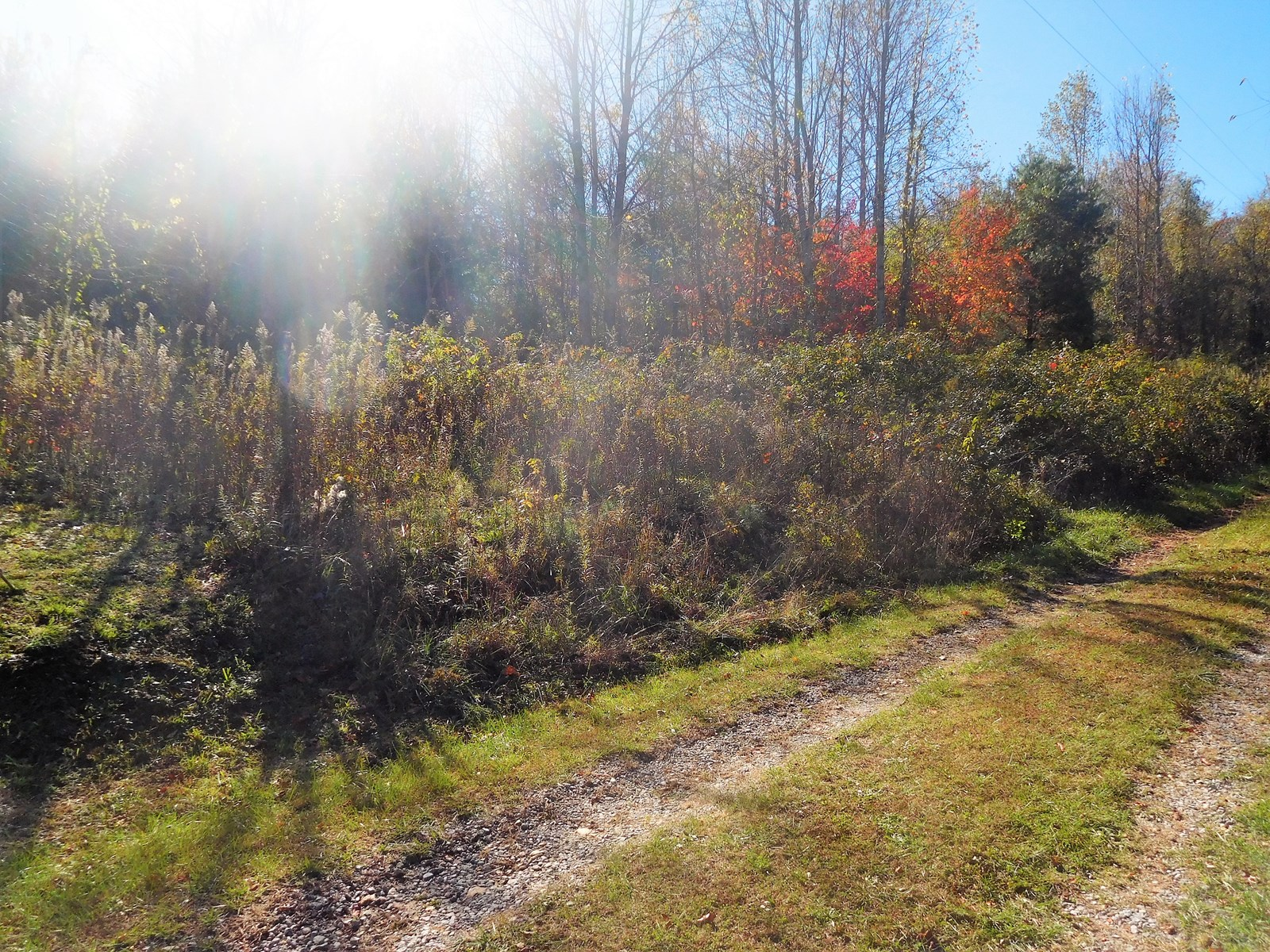 Building Lot, Sparta, NC Blue Ridge Moutains. No HOA Fees!