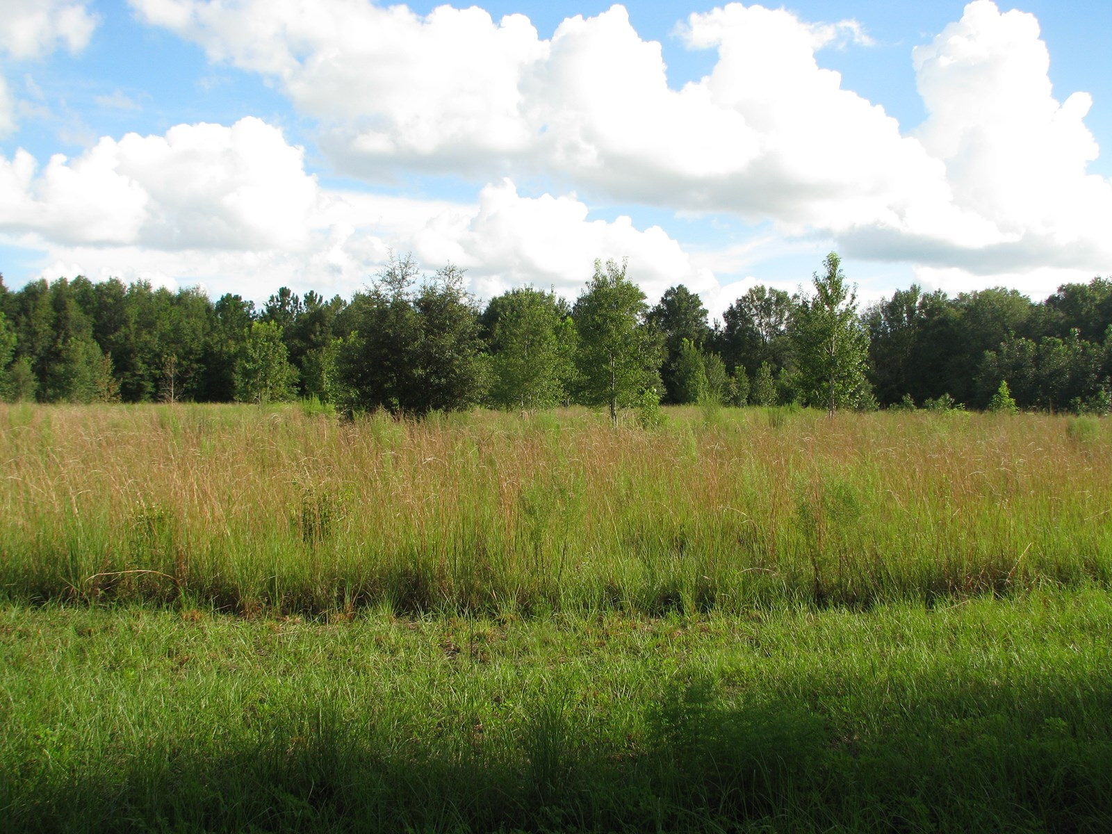 10 BEAUTIFUL acres between Newberry and High Springs, FL