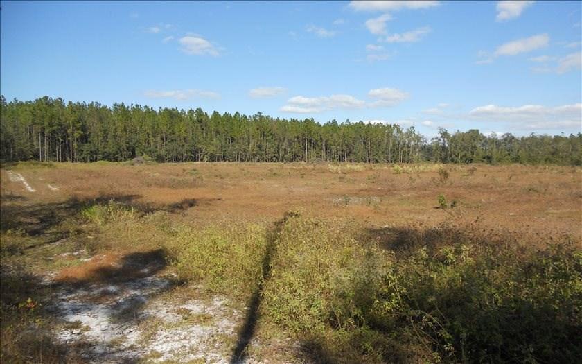 Cleared Land in McAlpin, FL
