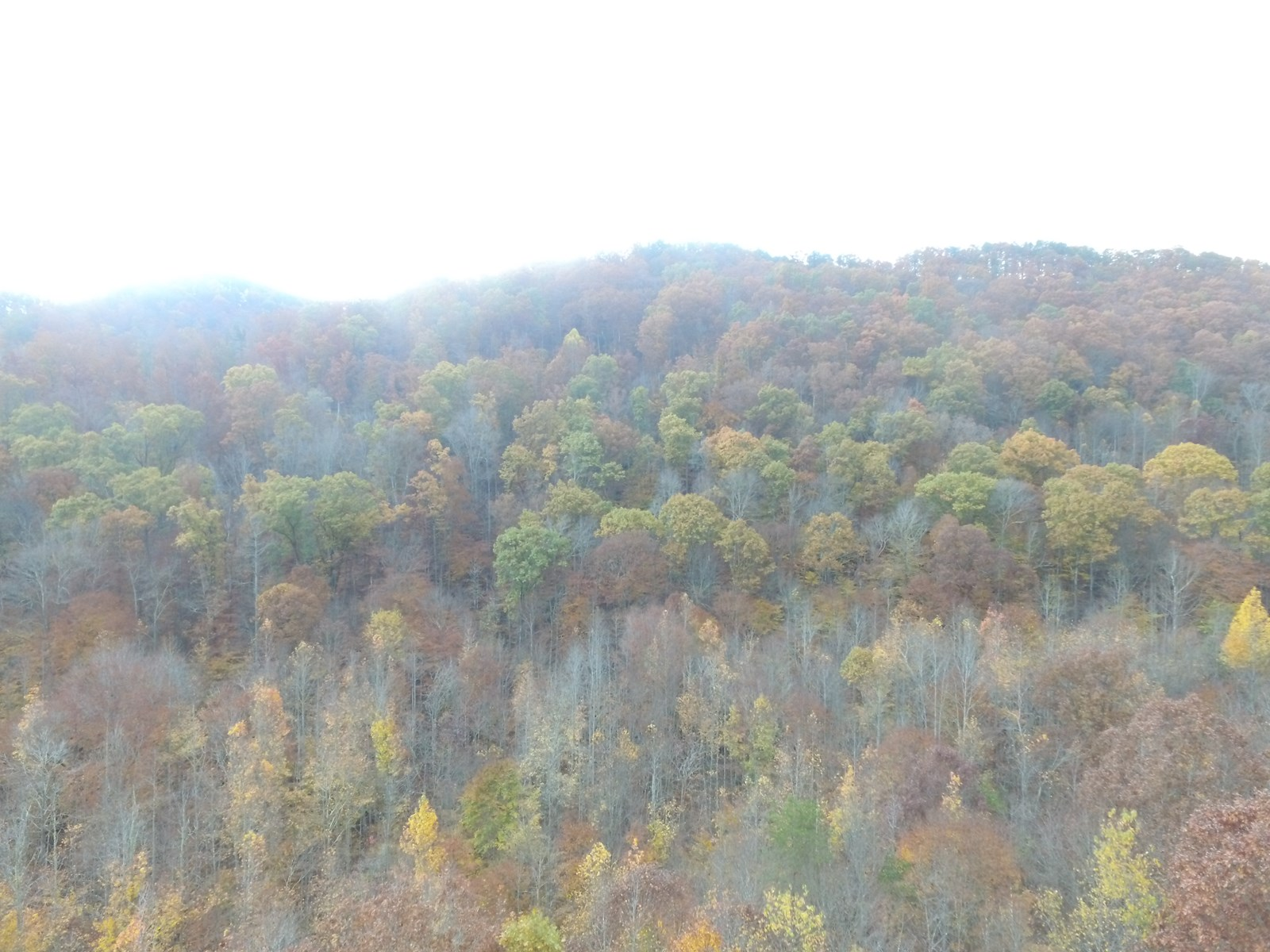 East Tennessee Mountain Property for Sale Bean Station TN
