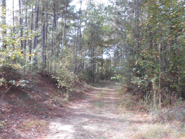 40 Acres For Sale Amite County MS Hunting Land Recreational