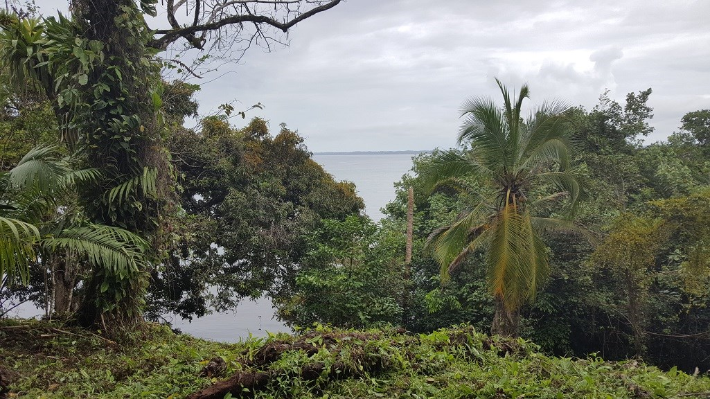 Titled Coastal Land, 20 acres Bocas del Toro Panama