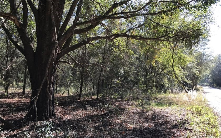 5 Acre Lot For Sale in North Florida