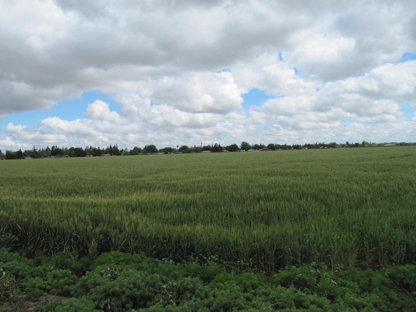 Great 40 acres farm land in Northern CA with Class 1 Soil