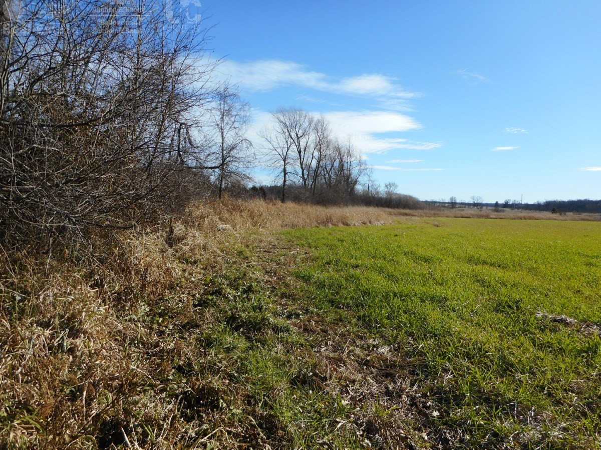 Grand Buildable Parcel with Hunting Opportunities
