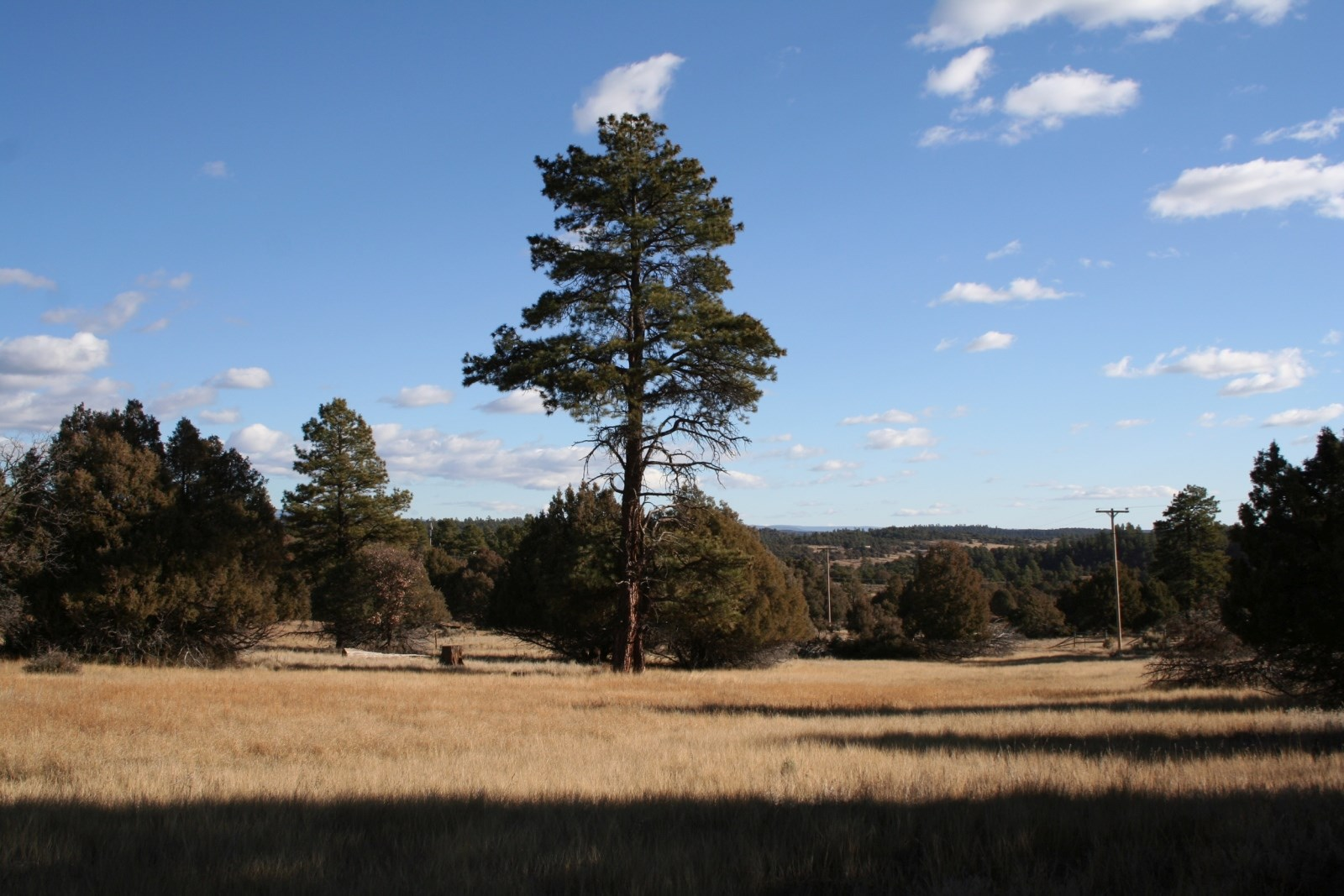 Land for Sale Near Heron Lake NM with Well and Electricty