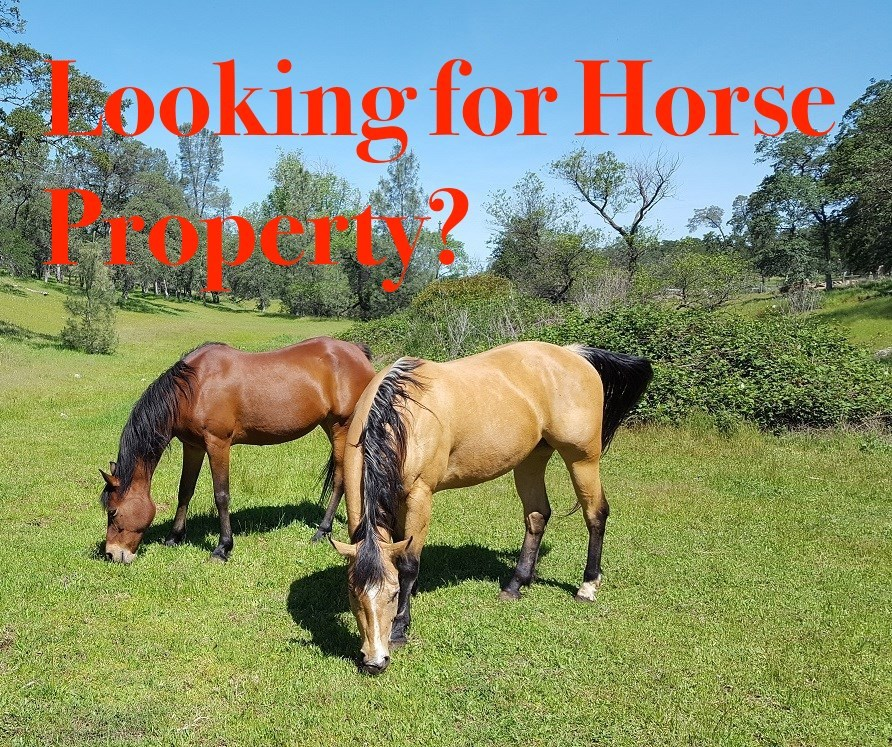 Looking for a Northern NV Horse Property for sale?