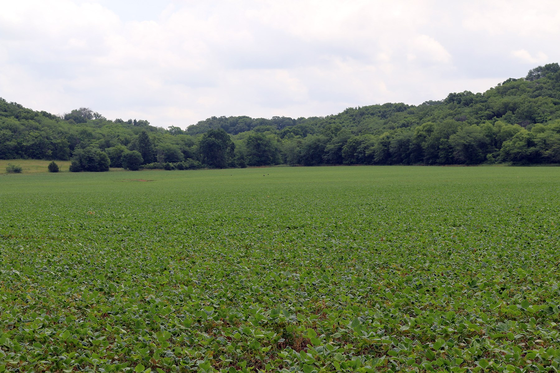 HIGHLY TILLABLE CREEK BOTTOM FARM -- 97 +/- ACRES