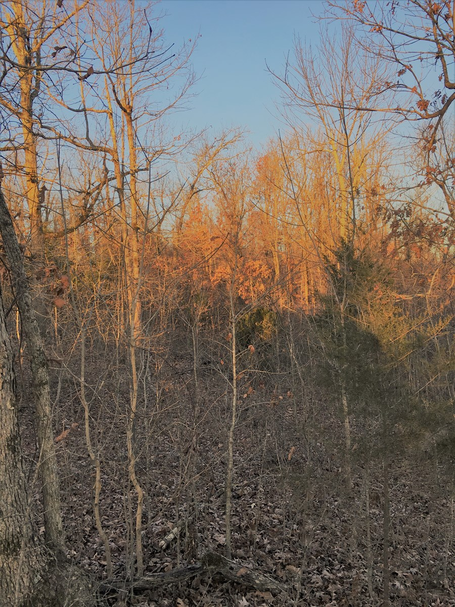 Hunting Property Priced Right in the Ozarks of Arkansas!