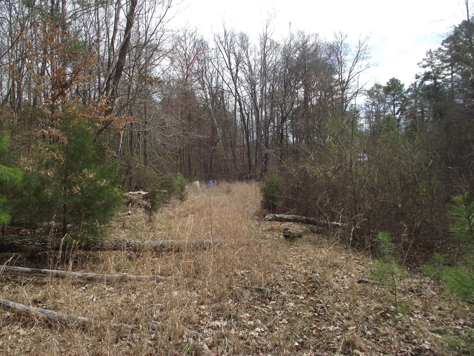 WOODED TENNESSEE LAND FOR SALE - STREAM - UTILITIES