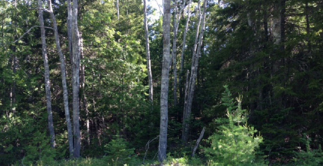Maine Land for Sale in Cutler