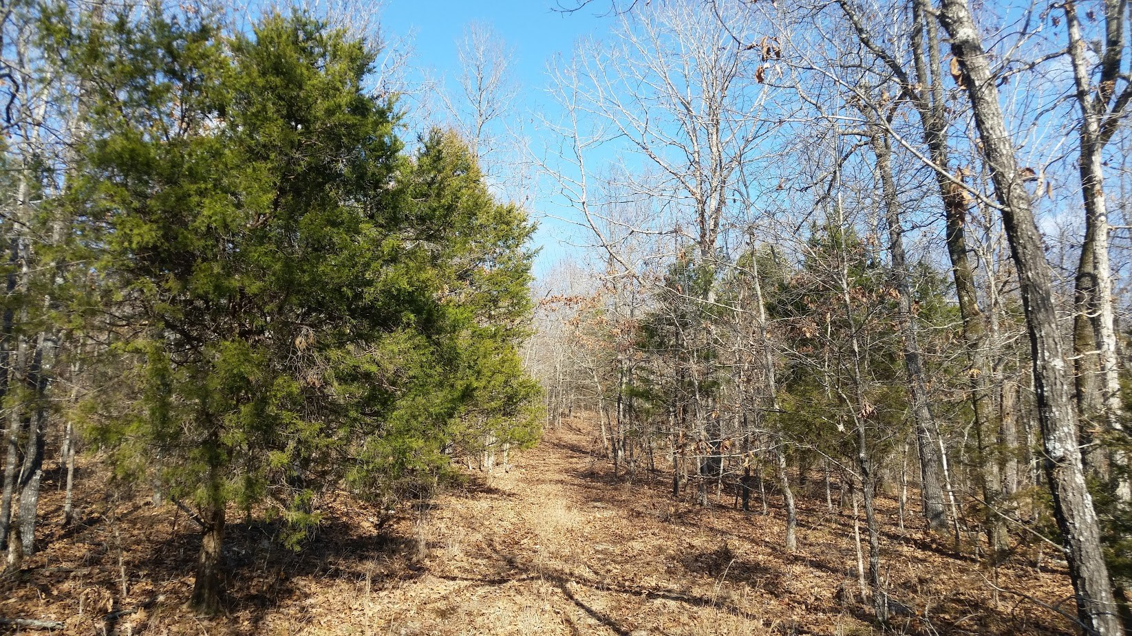 Southeast Missouri HUNTING LAND FOR SALE