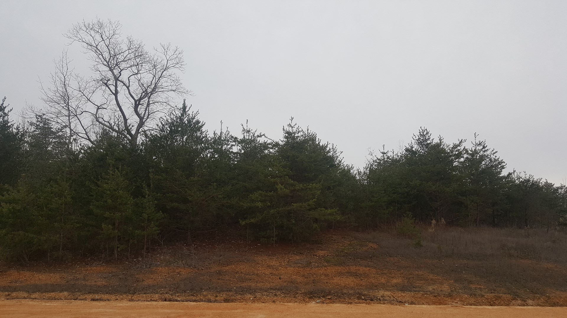 SOLD! SOUTH TN LAND FOR SALE CLIFTON  TN RIVER AREA