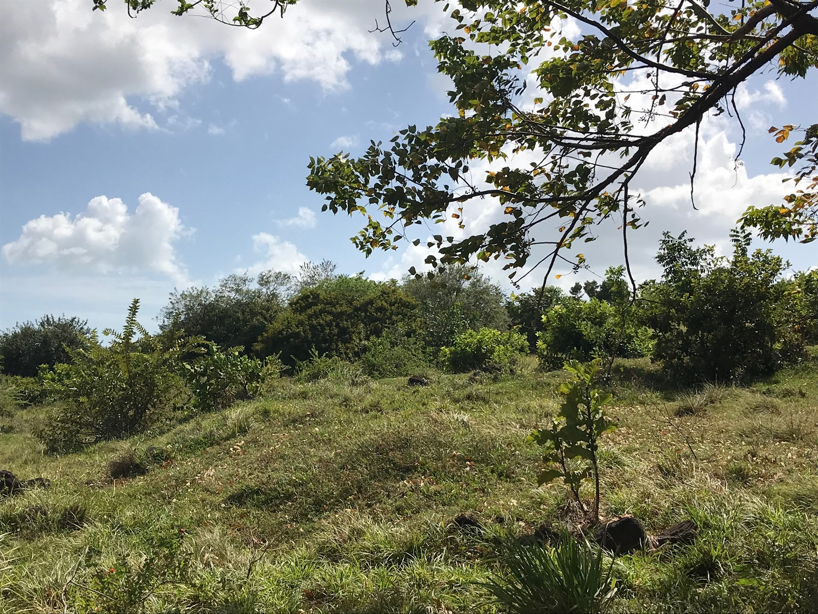 Lot in Punta Chame, only 90 meters from Carretera Panamerica