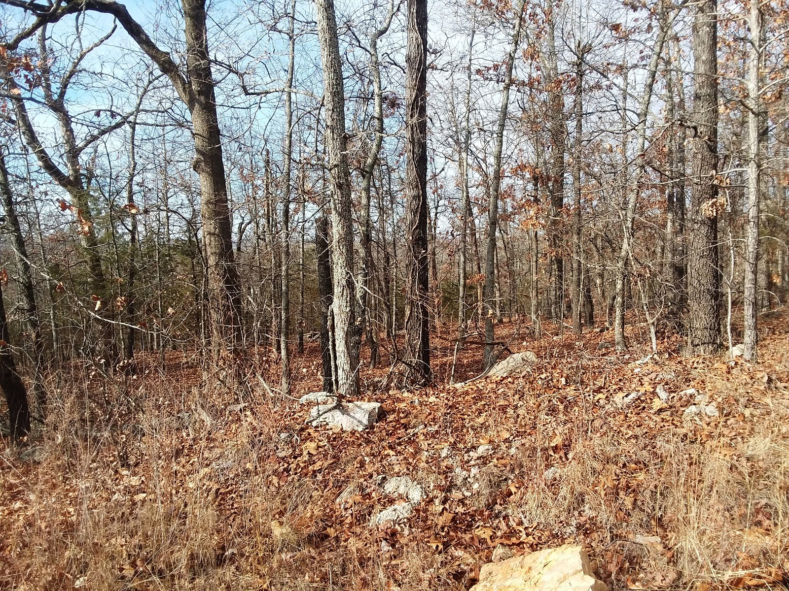 Acreage for sale in Sharp County AR near South Fork RIver