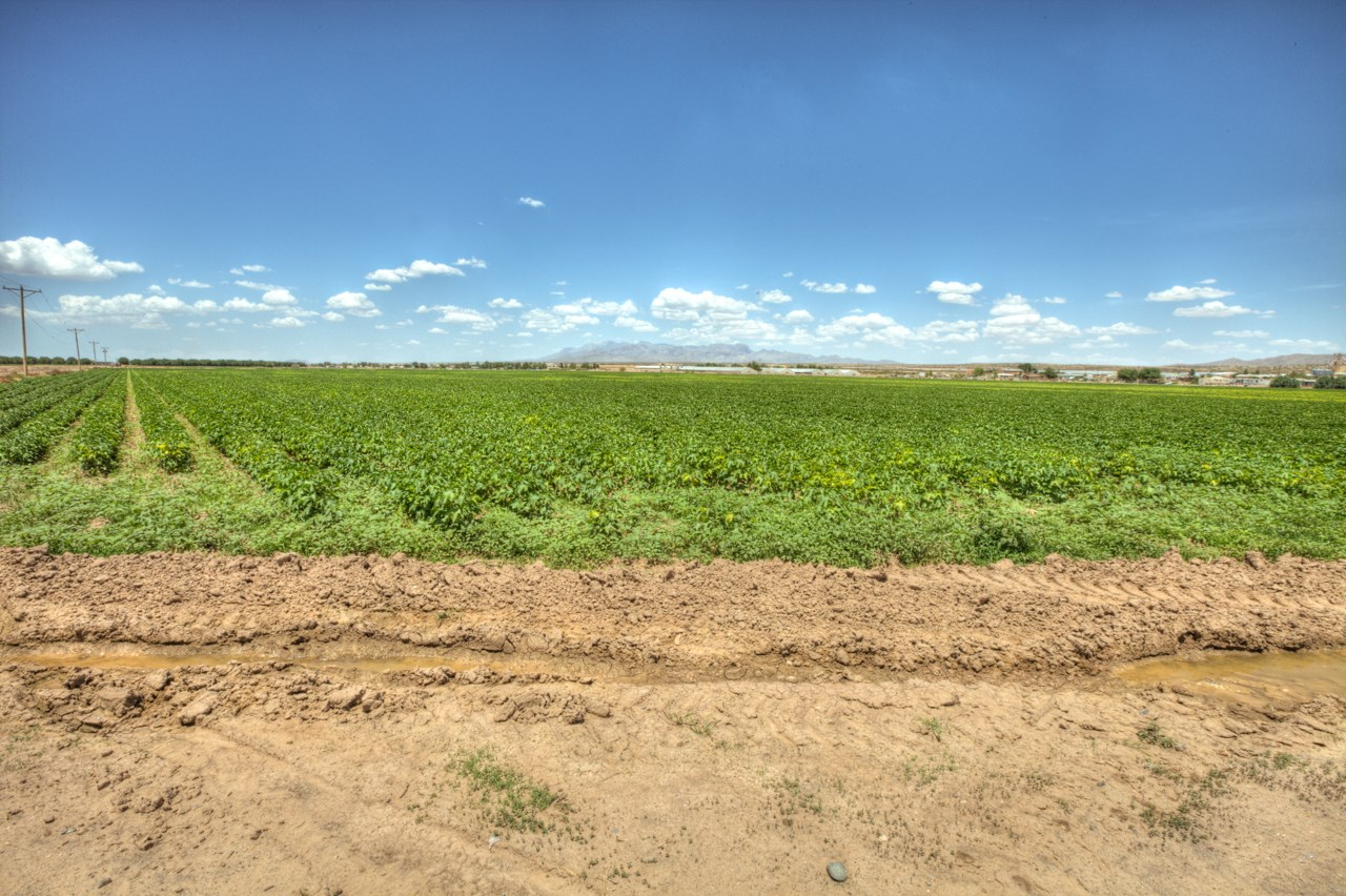 Farm For Sale, Rio Grande Valley, NM, Great to plant Pecans!