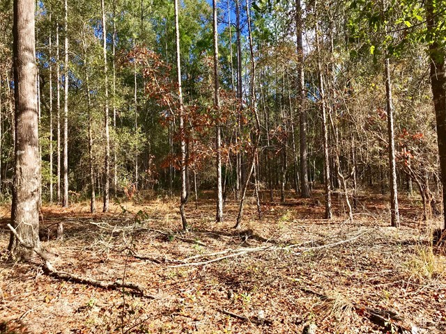 North Central Trenton,FL wooded acreage