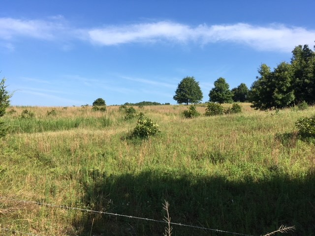 Cattle Farm and Hunting Property for Sale -Salem, AR