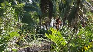BOCAS DEL TORO COASTAL BEACH LOT IN SALT CREEK, PANAMA
