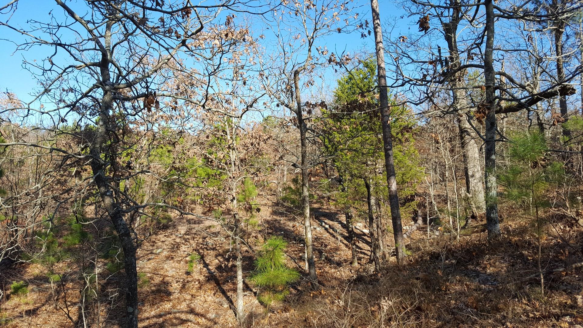 Hunting Land on Flagpole Mountain