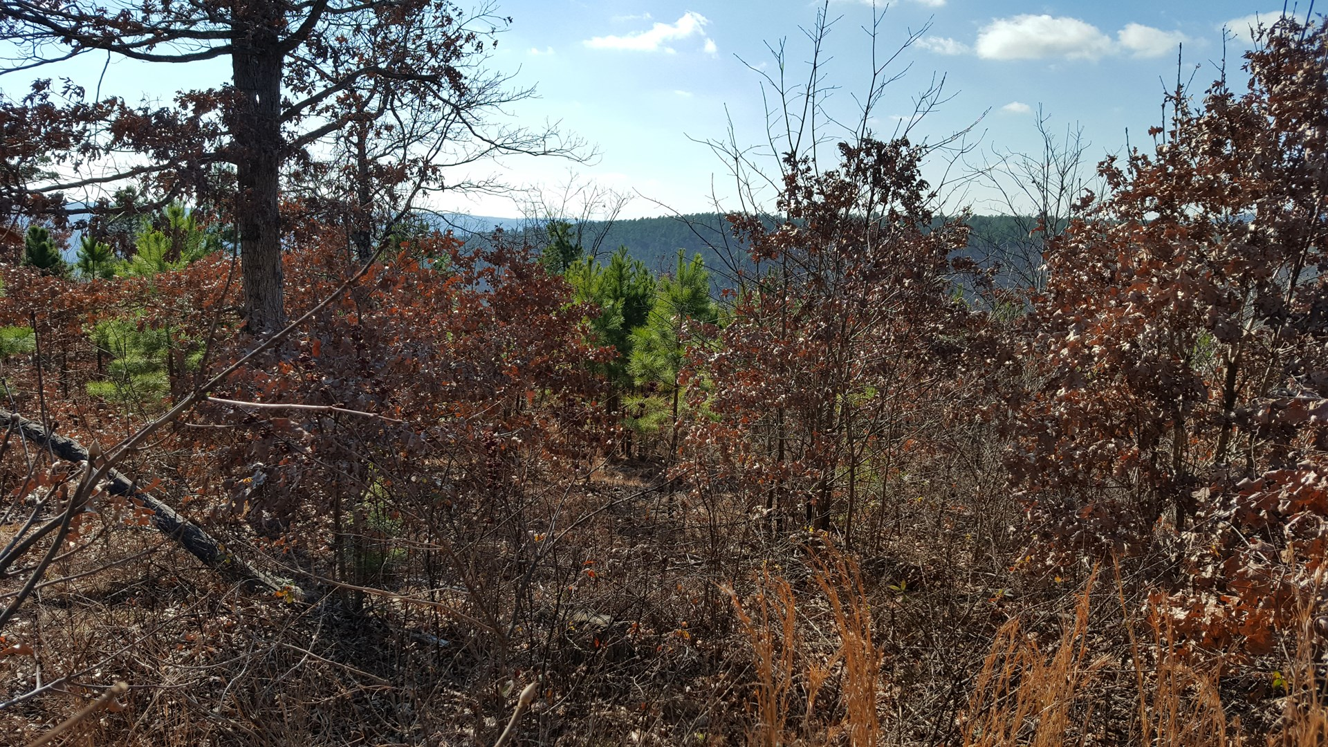 5 acres on Flag Pole Mountain