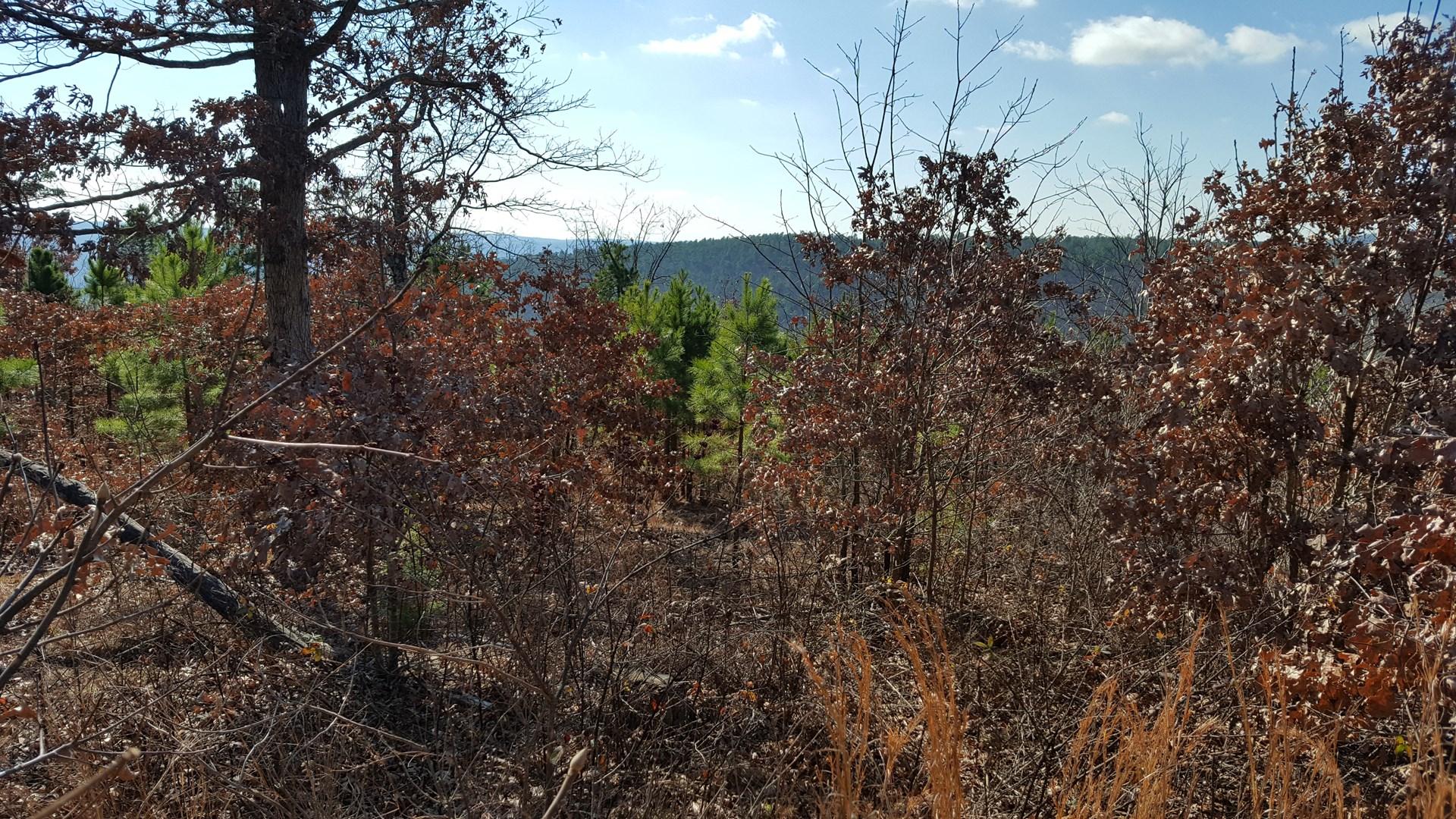 5 acres on Flag Pole Mountain