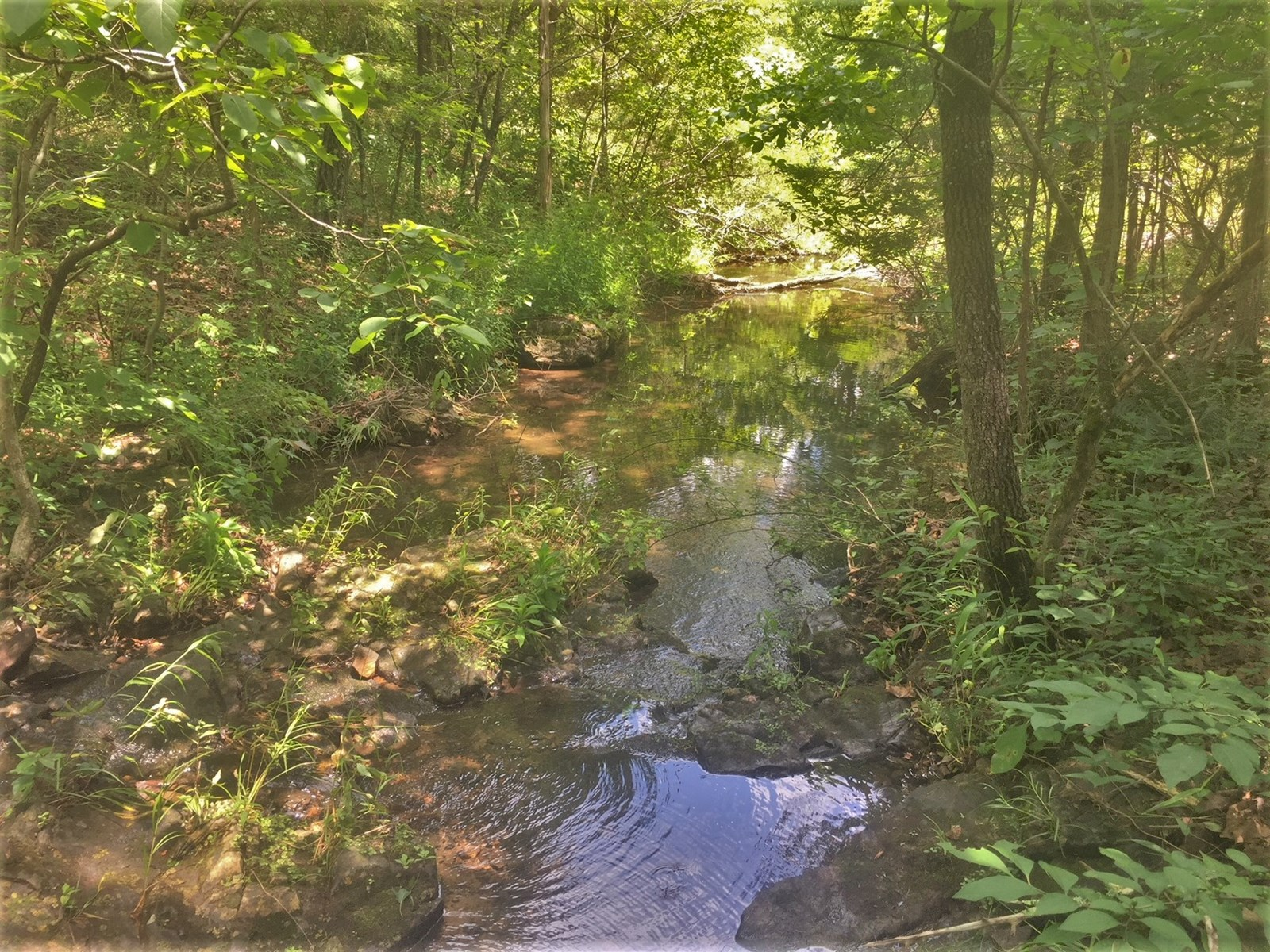 30 Acres on Branch Creek for sale