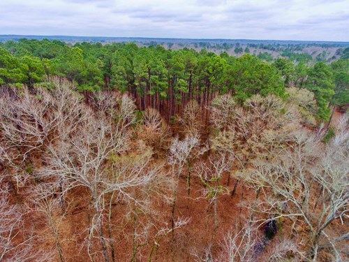 16.8 Acre Timber/Recreational Investment, Greenwood, LA