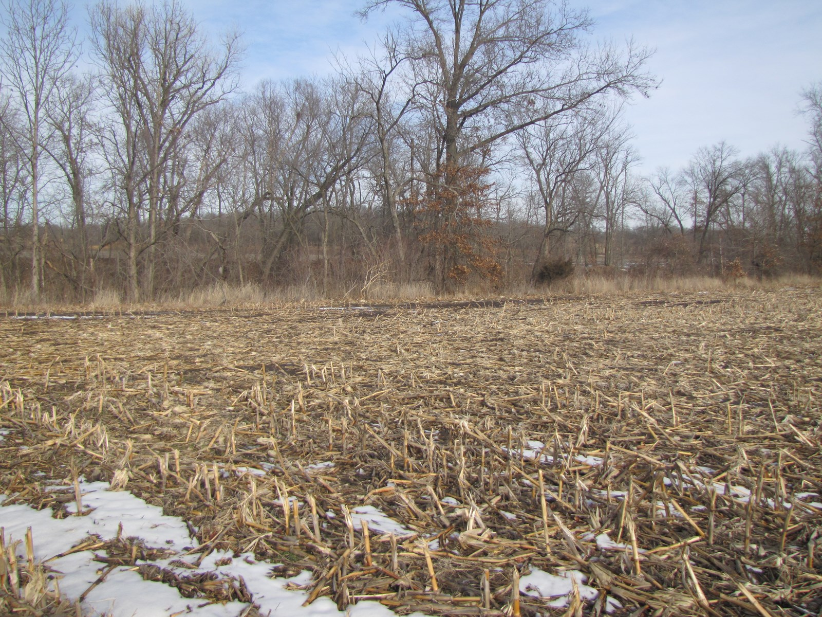 Land For Sale, NE MO Hunting w/Income Scotland County
