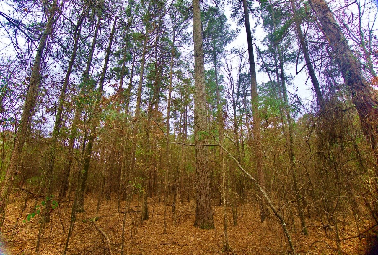 19.6 Acre Timber/ Development Investment, Hosston, LA