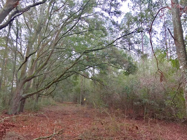 North Central Bell Trenton Florida  Homesite