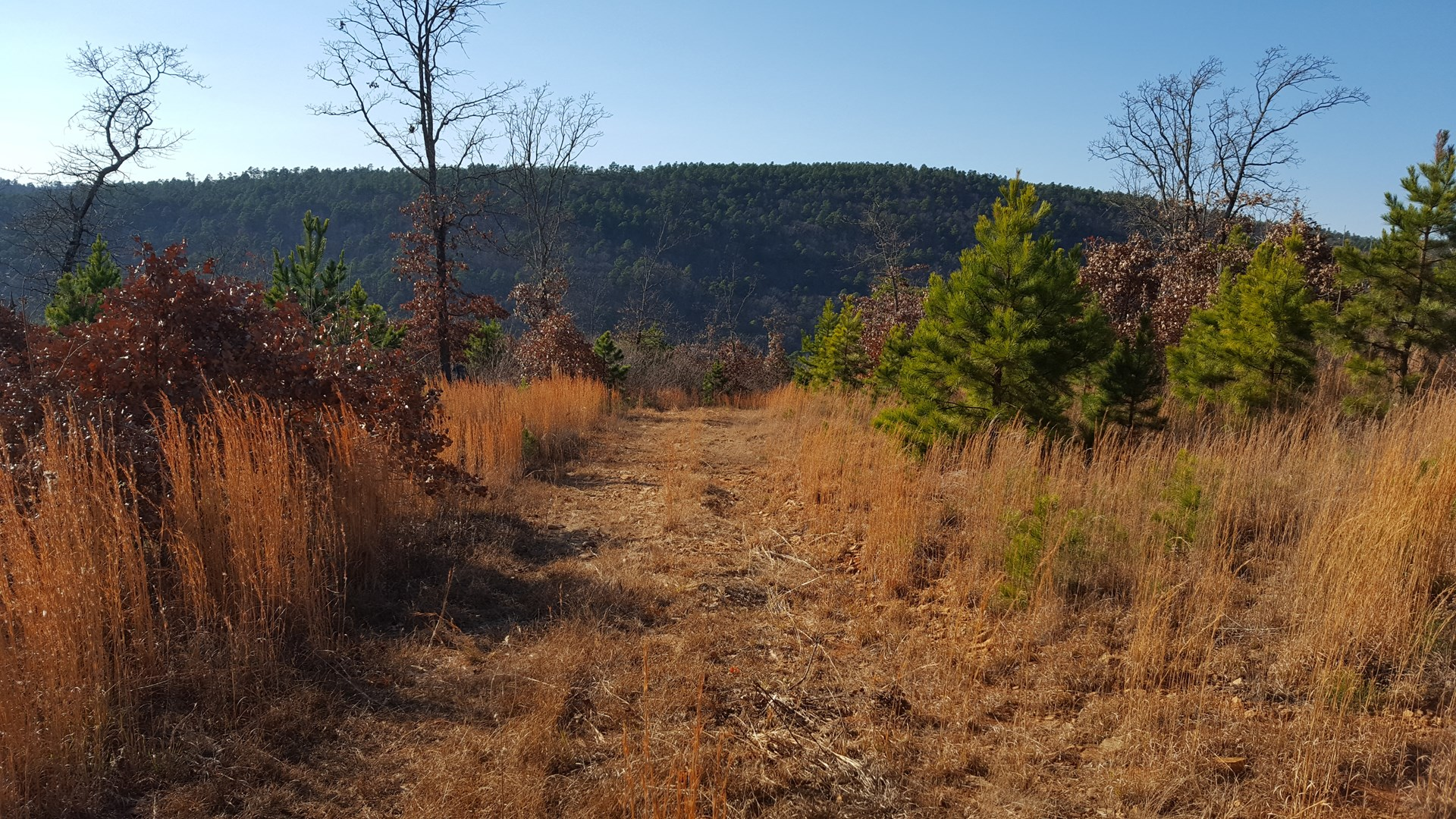 99.31Acres of Southeast Oklahoma Hunting and Recreation Land