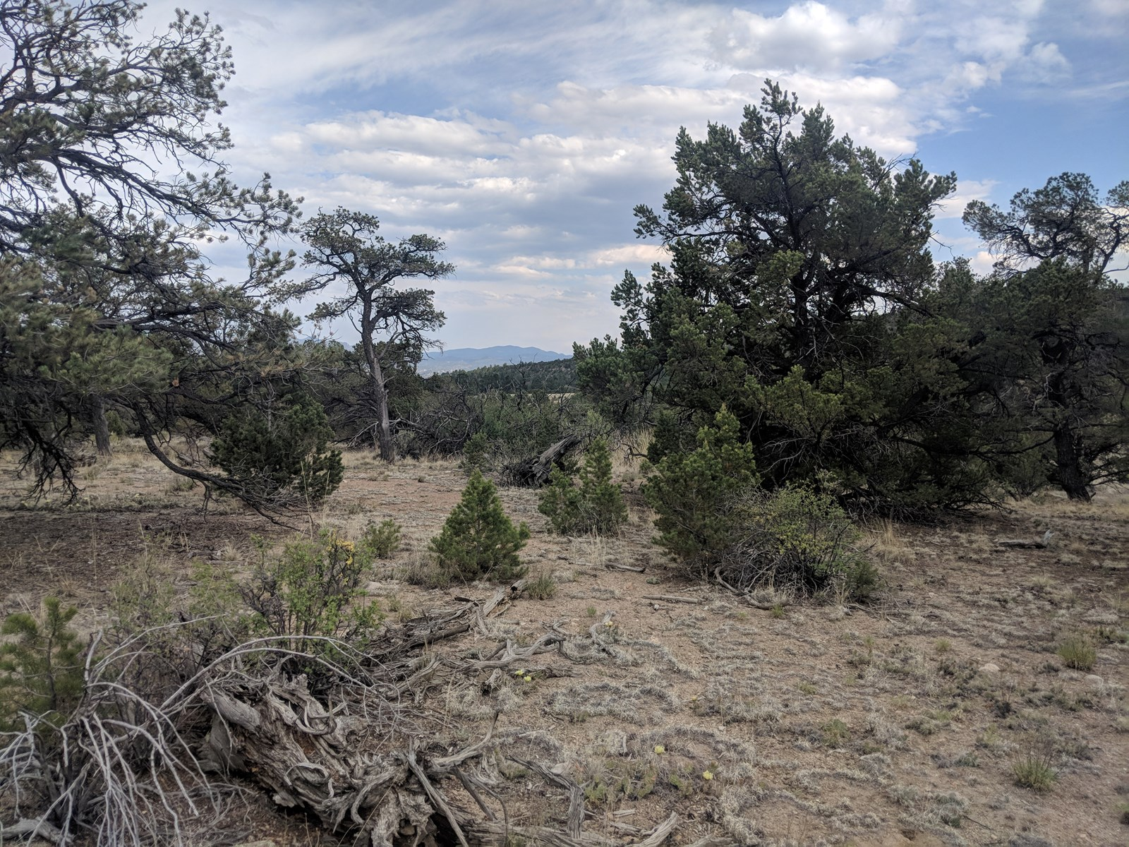 Pristine lots with panoramic views for sale Chaffee Cty CO