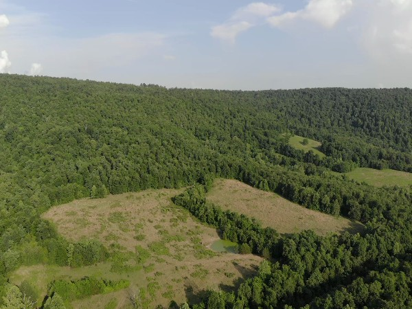 Arkansas Hunting Land for Sale in the Central Ozarks