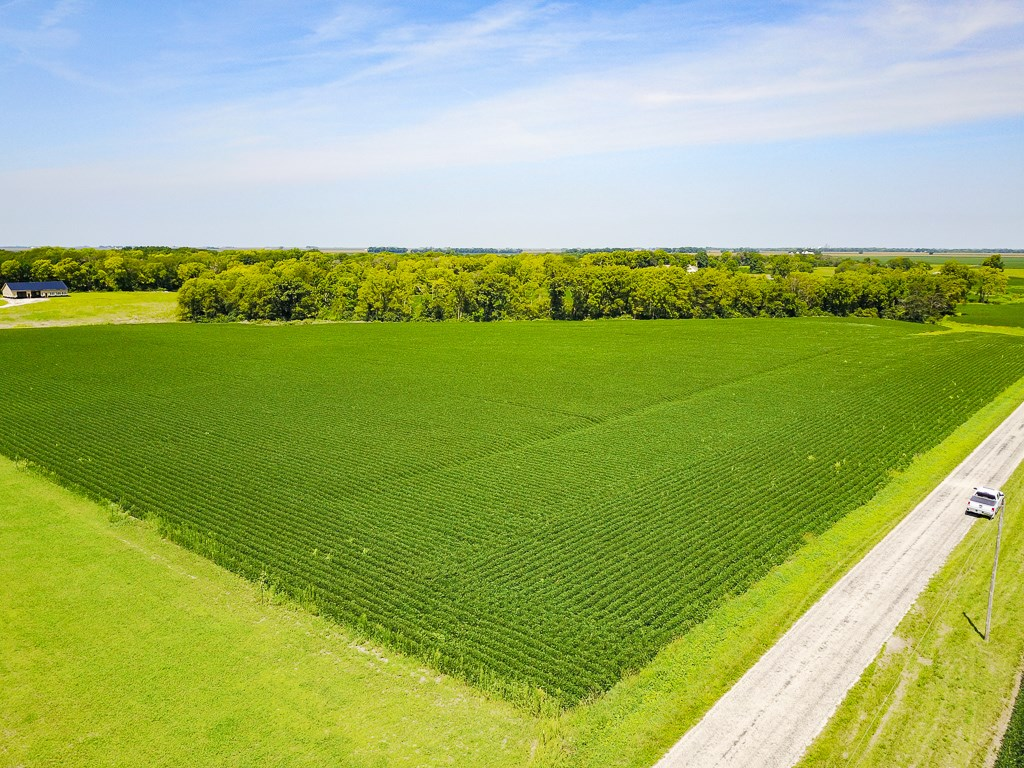 Moultrie County 60 Acre Hunting and Tillable Farm For Sale