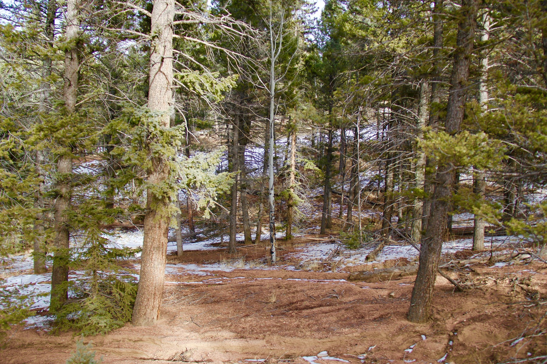 Land with Trees For Sale in Colorado Mountain Estates